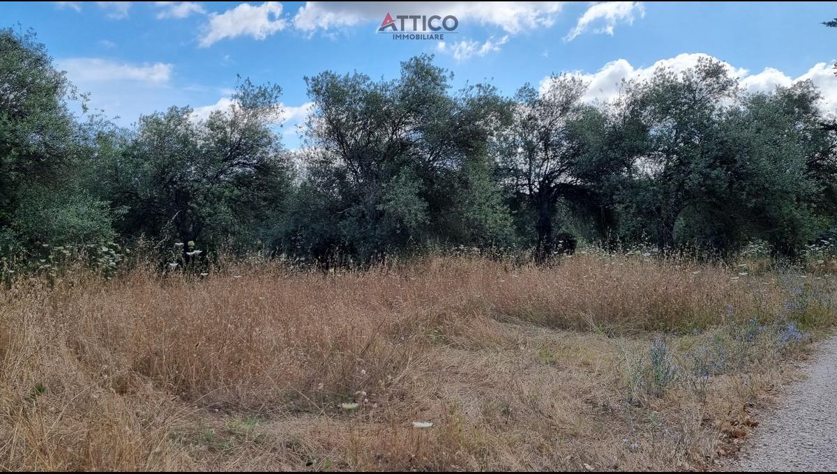 Ampio uliveto con rudere zona Buddi Buddi, Str. Vic. Zinziodda 36, Sassari, Sardegna.